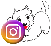 Find your pet freshly groomed by the pros at Grrreendog Grooming Spa and Daycare on Instagram